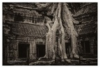 Roots In Ruins 3, Ta Prohm, 2014