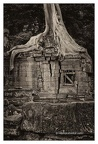 Roots In Ruins 5, Ta Prohm, 2014