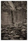 Roots In Ruins 6, Ta Prohm, 2014