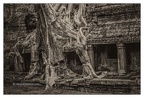 Roots In Ruins 7, Ta Prohm, 2014